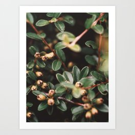 Lil plant Art Print