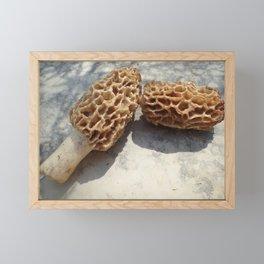 morel mushrooms Framed Mini Art Print