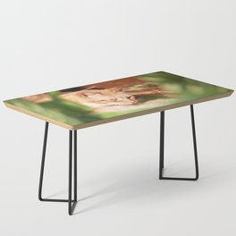 Cats Coffee Table