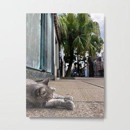 Recoleta Kitty, Buenos Aries, Argentina Metal Print