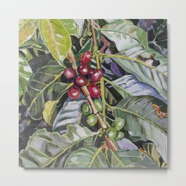 Coffee Plant Botanical, Colombia Metal Print