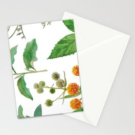 Herbal Blend Stationery Cards