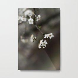 Flower Photography by Pourya Sharifi Metal Print