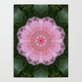 Pink Carnation Mandala Abstract Poster