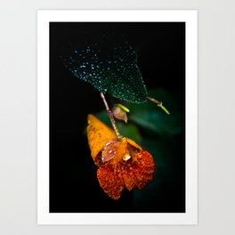 Jewel Weed in the early morning dew Art Print