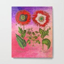 Vintage Botanical Collage - Poppies, Papaver Somniferum Metal Print