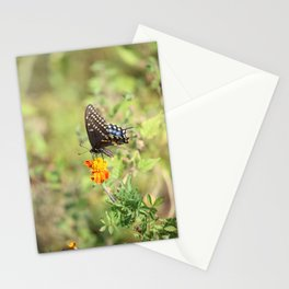 Black Swallowtail Butterfly Stationery Cards