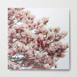 Magnolias II Metal Print