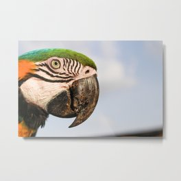 Macaw Close up Metal Print