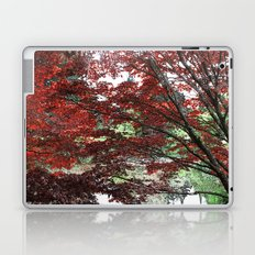 Red Japanese maple tree in Van Dusen Garden, Vancouver, BC, Canada. Floral nature photography. Laptop & iPad Skin