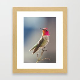 King of the Hummers Framed Art Print