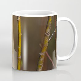 Branches. || Latvian Nature. || Early Spring. || Sunlight. || Close up. Coffee Mug