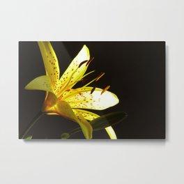 Lilly Metal Print