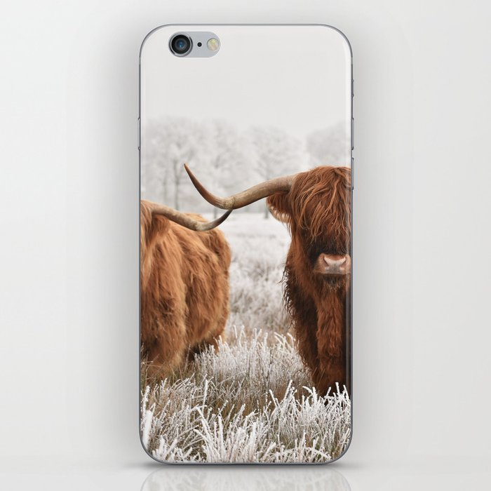 Hairy Scottish highlanders in a natural winter landscape. iPhone Skin