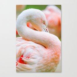 Mad Flamingo (Color) Canvas Print