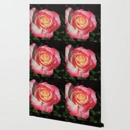 Multi-Hued Rose Wallpaper