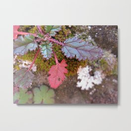 Plant And Moss Metal Print