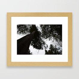 Trees in the Winter  Framed Art Print