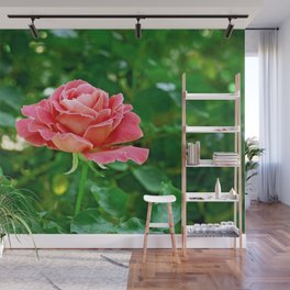 Pink Rose Close up II Wall Mural