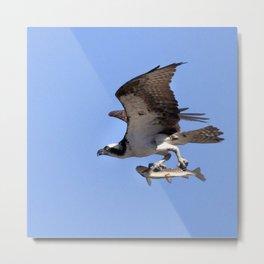 Watercolor Bird, Osprey 08, Yellowstone, Wyoming Metal Print