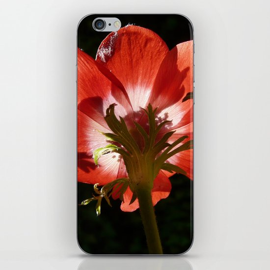 RED ANEMONE FLOWER iPhone & iPod Skin