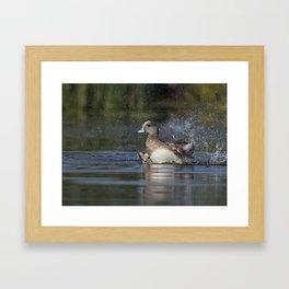 American Widgeon Framed Art Print