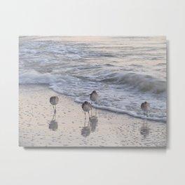 Sandpipers  Metal Print