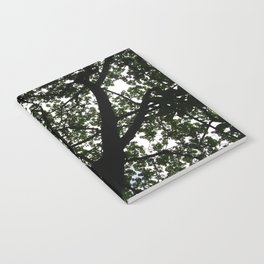 Looking up into the Kapok tree Notebook