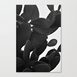Cactus in Black And White Canvas Print