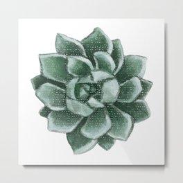 Echeveria lilacina Metal Print
