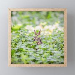 Itty Bitty Baby Bunny Framed Mini Art Print