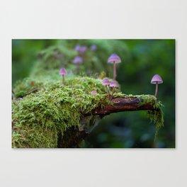 Cogumelo Canvas Print