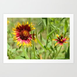 Sunbathing Wildflower Art Print