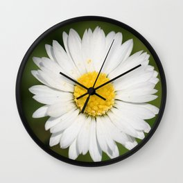 Closeup of a Beautiful Yellow and Wild White Daisy flower Wall Clock