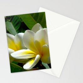 White summer Flowers by Lika Ramati Stationery Cards