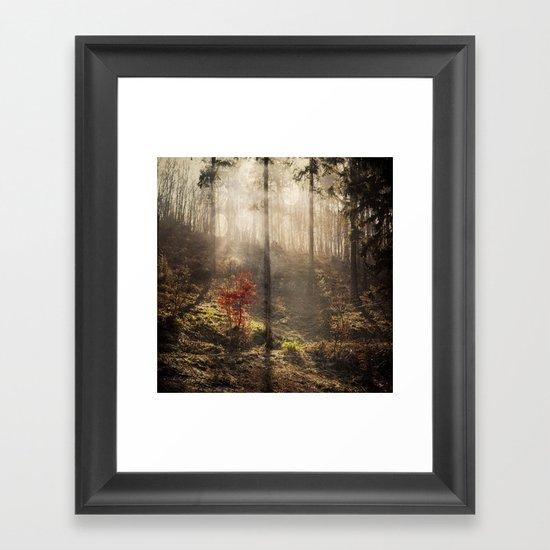 light of a new season Framed Art Print