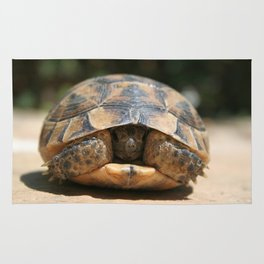 Young Spur Thighed Tortoise Looking Out of Its Shell Rug