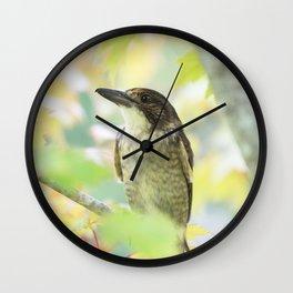 Australian Butcher Bird Wall Clock