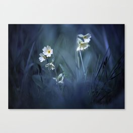Beauty in a Mess. Canvas Print