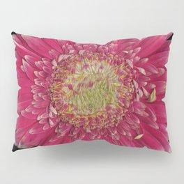 Pink Gerbera Daisy Pillow Sham
