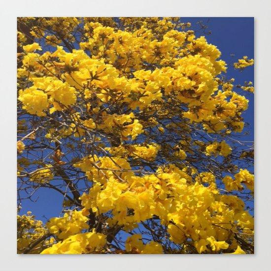 Beautiful tree in Santa Paula, CA Canvas Print