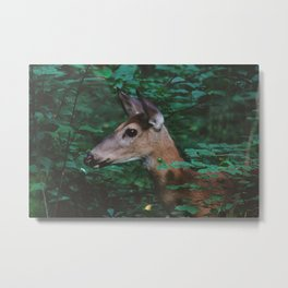 Forest Deer XVIII Metal Print