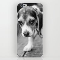 puppy iPhone & iPod Skins featuring Puppy! by Clayton Jones