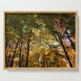 Through the Trees in October Serving Tray
