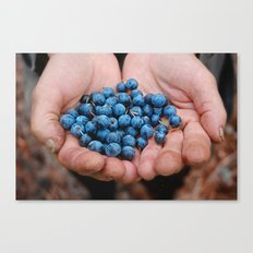 Blueberry Bogs Forever Canvas Print
