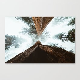 Stand in Awe of the Giant Forest Canvas Print