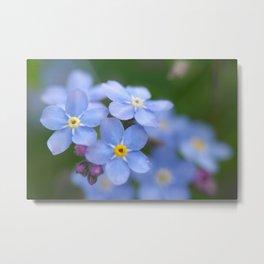 Flowers Izby Garden 4 Metal Print