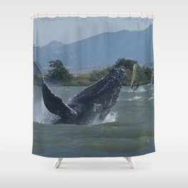 Humpback Whale Breaching by Windsurfers Shower Curtain