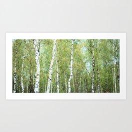 the birch forest III Art Print