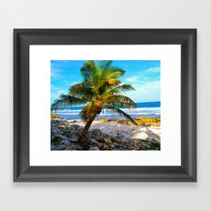 Mexican Palm Framed Art Print